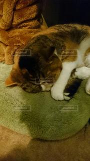 猫の写真・画像素材[305090]