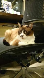 猫の写真・画像素材[305091]