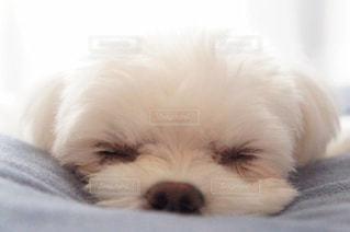 犬の写真・画像素材[429858]