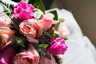 花の写真・画像素材[431352]