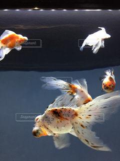 魚の写真・画像素材[428114]