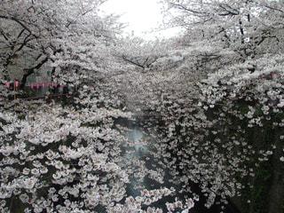 春 - No.428118