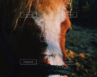 犬の写真・画像素材[428819]