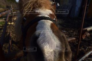 犬の写真・画像素材[428820]