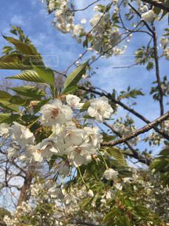 花の写真・画像素材[430064]
