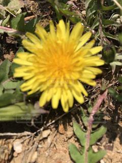 花の写真・画像素材[434223]