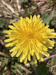 花の写真・画像素材[434225]