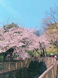 春 - No.428734