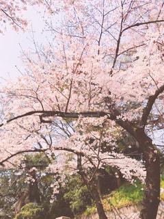 春 - No.428736