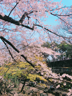 春 - No.428737