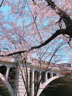 春 - No.428739