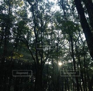キャンプの写真・画像素材[429161]