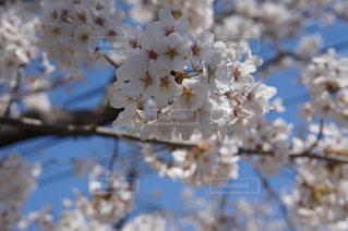 春の写真・画像素材[429105]