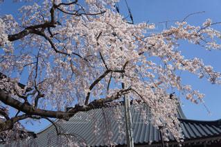 春の写真・画像素材[429106]
