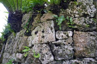 石垣島の写真・画像素材[465125]