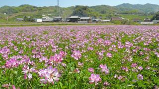 花畑の写真・画像素材[455597]