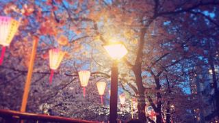 桜の写真・画像素材[430352]