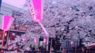 桜 - No.430355