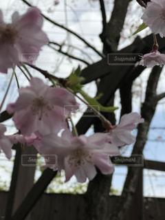 花の写真・画像素材[430508]