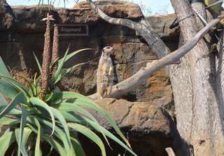 No.439991 動物園