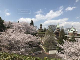 春の写真・画像素材[430942]