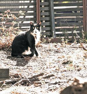 猫の写真・画像素材[433241]