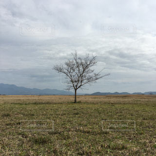 自然の写真・画像素材[432199]