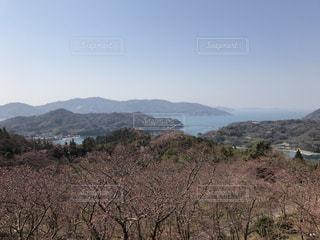 開山公園の桜でエンジョイの写真・画像素材[431447]
