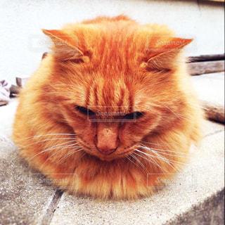 猫の写真・画像素材[431809]