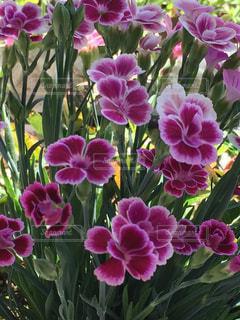 花の写真・画像素材[534712]