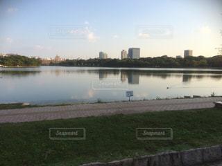池の写真・画像素材[431837]