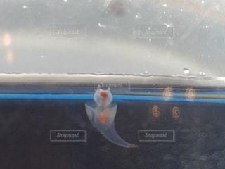泳ぐの写真・画像素材[437283]