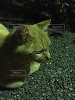 猫の写真・画像素材[437290]