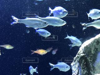 海の写真・画像素材[649920]