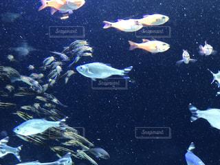 海の写真・画像素材[649921]