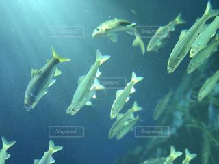 海の写真・画像素材[649944]