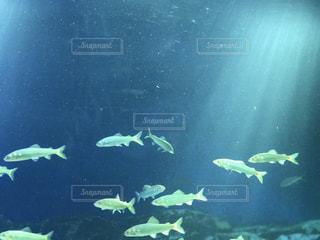 海の写真・画像素材[649945]
