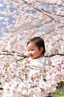 春の写真・画像素材[434794]