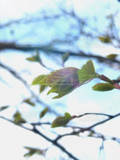 自然の写真・画像素材[432649]