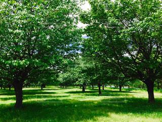 公園 - No.483552