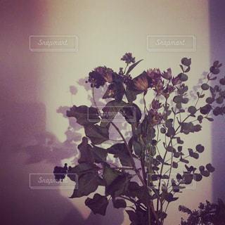 花の写真・画像素材[435681]
