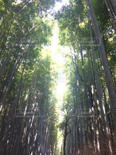 京都の写真・画像素材[433063]