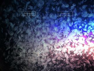 クラゲの大群の写真・画像素材[2138874]