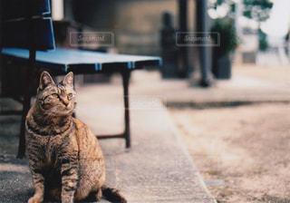 猫の写真・画像素材[448022]