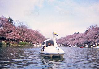 春の写真・画像素材[448406]