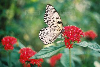 赤い花がすきの写真・画像素材[1560312]