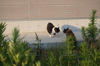 猫の写真・画像素材[560721]
