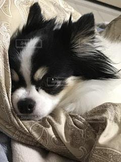 犬の写真・画像素材[444865]