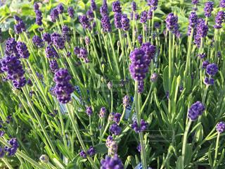 お花畑の写真・画像素材[436755]
