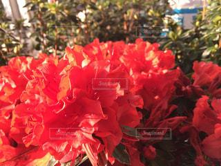 お花畑の写真・画像素材[436789]